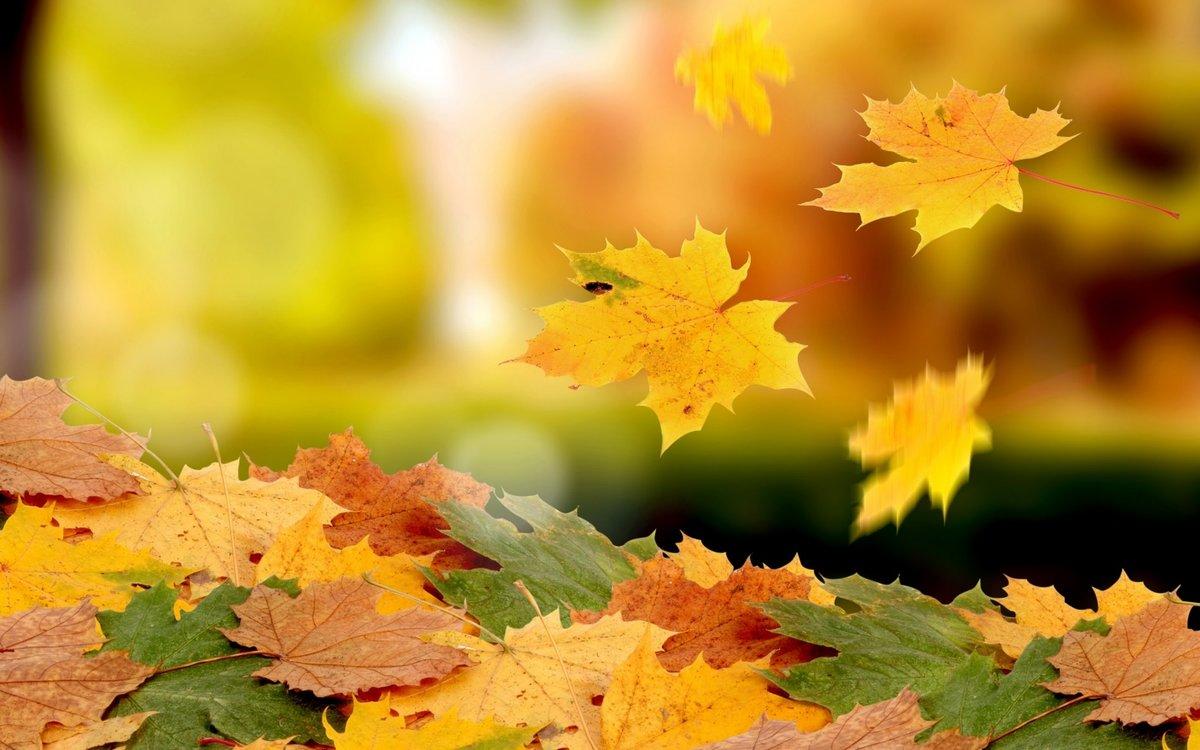 Прощай сентябрь, здравствуй октябрь!